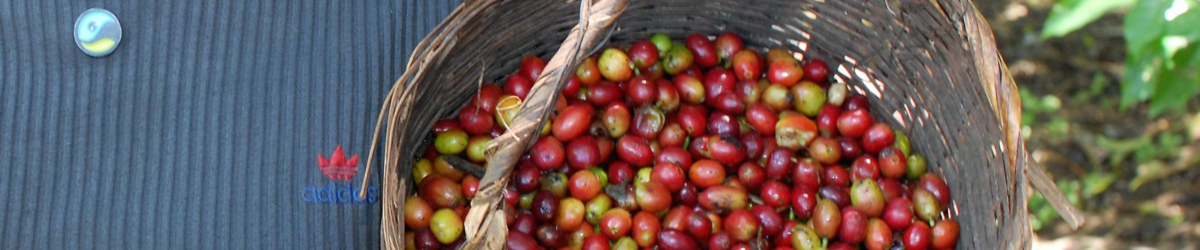 Why is Fairtrade necessary? Farming coffee without Fairtrade